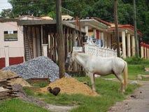 Viñales Kuba arkivbild