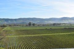 Viñedo California del paisaje de la montaña Foto de archivo libre de regalías