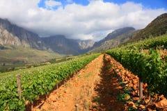 Viñedo de la montaña Imagen de archivo libre de regalías