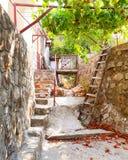 Viñedo de Montenegrian Fotografía de archivo