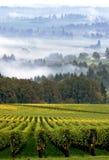 Viñedo de Oregon en niebla de la madrugada