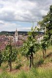 Viñedo de Schaffhausen, Suiza imágenes de archivo libres de regalías