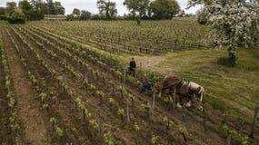 Viñedo de trabajo con un caballo de proyecto, Santo-Emilion-Francia de la visión aérea foto de archivo libre de regalías