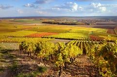 Viñedo del otoño y cielo azul Foto de archivo libre de regalías
