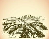 Viñedo. Ejemplo del vino y de la uva.