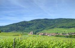 Viñedo en Alsacia Foto de archivo libre de regalías