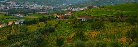 Viñedo en el Peso DA Regua en Alto Douro Wine Region, Portugal imagen de archivo libre de regalías