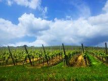 Viñedo en Francia Producción de vino - establecimiento de las uvas en bueno Foto de archivo libre de regalías