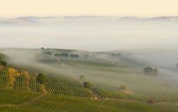 Viñedo en la niebla de la mañana Fotografía de archivo