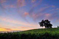 Viñedo en la puesta del sol Foto de archivo libre de regalías