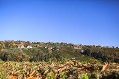 Viñedo en la ruta del vino de Schilcher con algunas chozas viejas tradicionales Foto de archivo