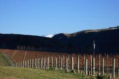 Viñedo en la salida del sol, Nueva Zelandia Fotografía de archivo libre de regalías