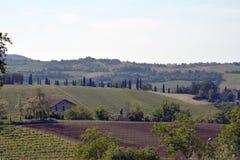Viñedo en las colinas de Reggio Emilia Fotos de archivo libres de regalías