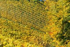 Viñedo en otoño Fotos de archivo