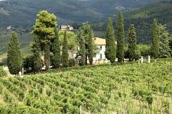 Viñedo en Toscana Fotos de archivo libres de regalías
