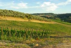 Viñedo en Toscana, Italia imagen de archivo