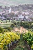 Viñedo en Transilvania Imagen de archivo libre de regalías