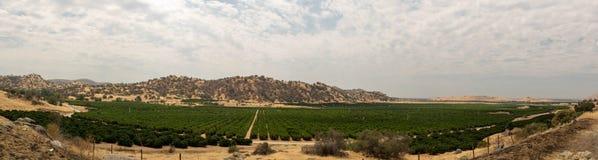 Viñedo en un valle seco de California foto de archivo