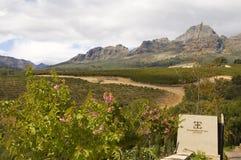 Viñedo Engelbrecht Els en Suráfrica Fotografía de archivo libre de regalías
