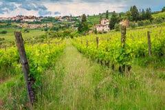 Viñedo espectacular con las casas de piedra, región de Chianti, Toscana, Italia, Europa fotografía de archivo