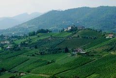Viñedo italiano Imagen de archivo libre de regalías