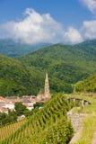 viñedo magnífico del cru, Thann, Alsacia, Francia imagen de archivo libre de regalías