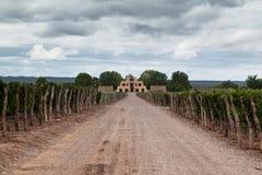 Viñedo Mendoza la Argentina de Zapata de la catenaria Fotografía de archivo