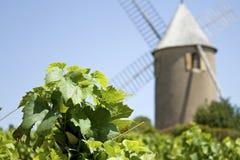 Viñedo, Moulin un respiradero, de Francia. Foto de archivo