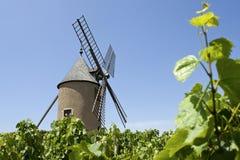 Viñedo, Moulin un respiradero, de Francia. Foto de archivo libre de regalías