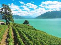 Viñedo, opinión del viñedo, presa en Italia Europa Fotografía de archivo libre de regalías