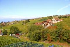 Viñedo, pueblos a lo largo del lago, Suiza Imagen de archivo