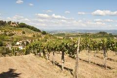 Viñedo toscano cerca de Florencia Italia imagen de archivo