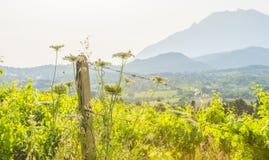 Viñedo verde en las colinas de la isla de Cerdeña en luz del sol imagenes de archivo
