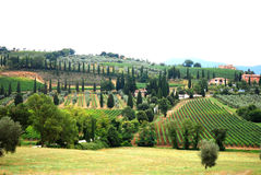 Viñedo y arboleda verde oliva Imagen de archivo