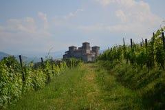 Viñedo y castillo Imagen de archivo libre de regalías