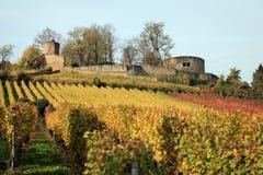 Viñedo y castillo del otoño foto de archivo