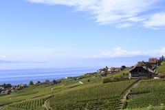 Viñedo y citynalong el lago, Suiza Fotos de archivo