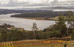Viñedo y lagar en la orilla del río de Tamar vista del puesto de observación de Bradys fotos de archivo