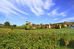 Viñedo y pequeño pueblo, Suiza Imagen de archivo