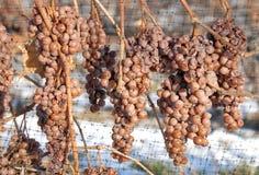 Viñedo y uvas de Icewine Fotografía de archivo
