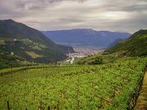 Viñedos cerca de la ciudad de Bolzano en las dolomías, Italia fotografía de archivo libre de regalías