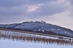 Viñedos cerca de Viena, Austria en invierno fotografía de archivo libre de regalías