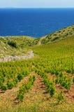 Viñedos, costa meridional de la isla de Hvar, al oeste de Foto de archivo libre de regalías