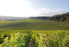 Viñedos de Chablis, Borgoña (Francia) Fotos de archivo libres de regalías