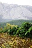 Viñedos de Franschhoek y montañas de Crimea imágenes de archivo libres de regalías