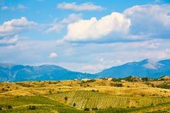 Viñedos de la colina del balanceo Foto de archivo libre de regalías