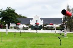 Viñedos de la región del vino de Stellenbosch fuera de Cape Town del sur Imagenes de archivo