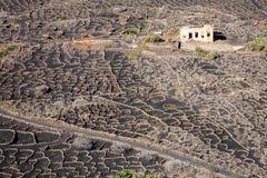 Viñedos de Lanzarote, islas Canarias fotografía de archivo libre de regalías