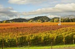 Viñedos de Napa Valley en Autumn Colors Imagen de archivo libre de regalías