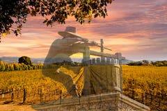Viñedos de Napa Valley, otoño, montañas, cielo de la salida del sol Foto de archivo libre de regalías